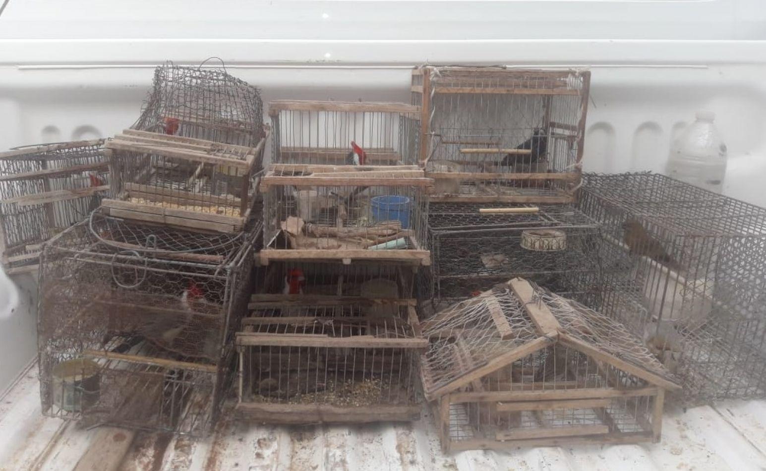 Rescate y liberación de aves