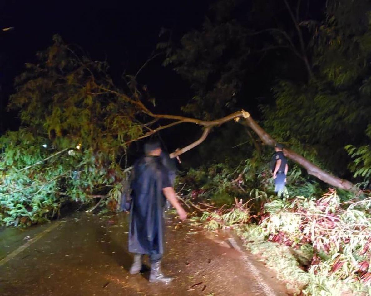 Se registraron caídas de árboles