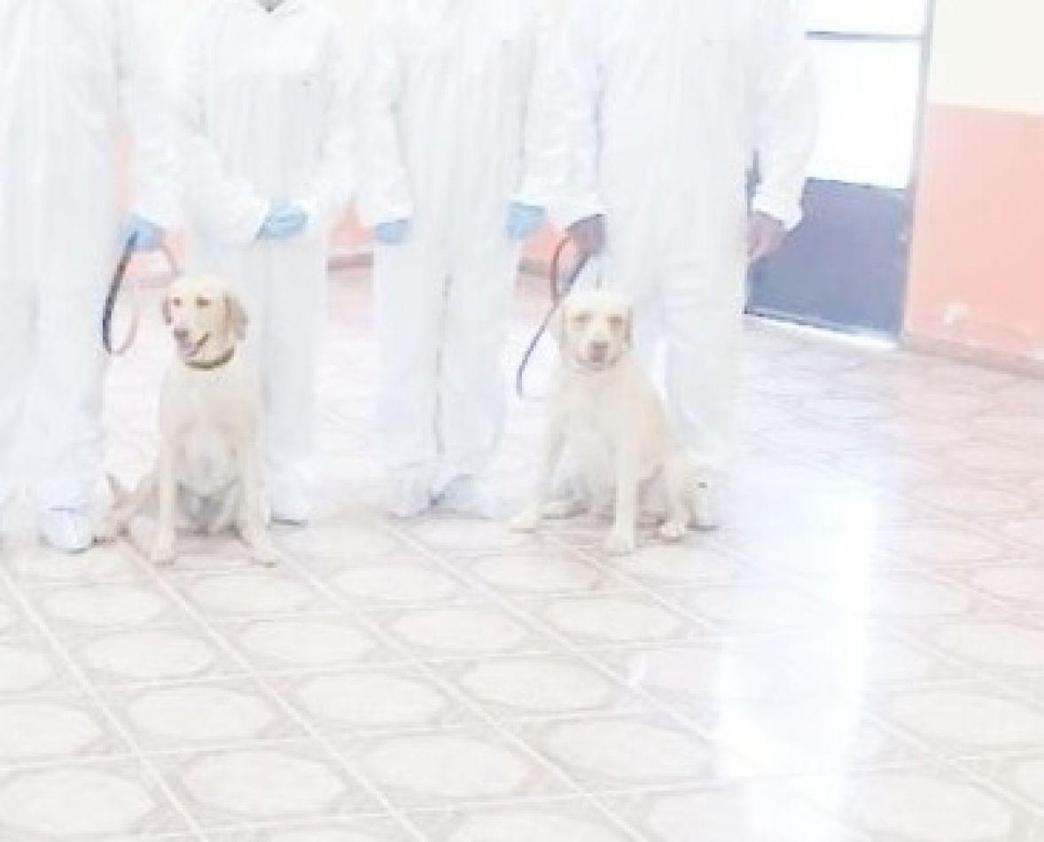Los canes Dardo y Cala