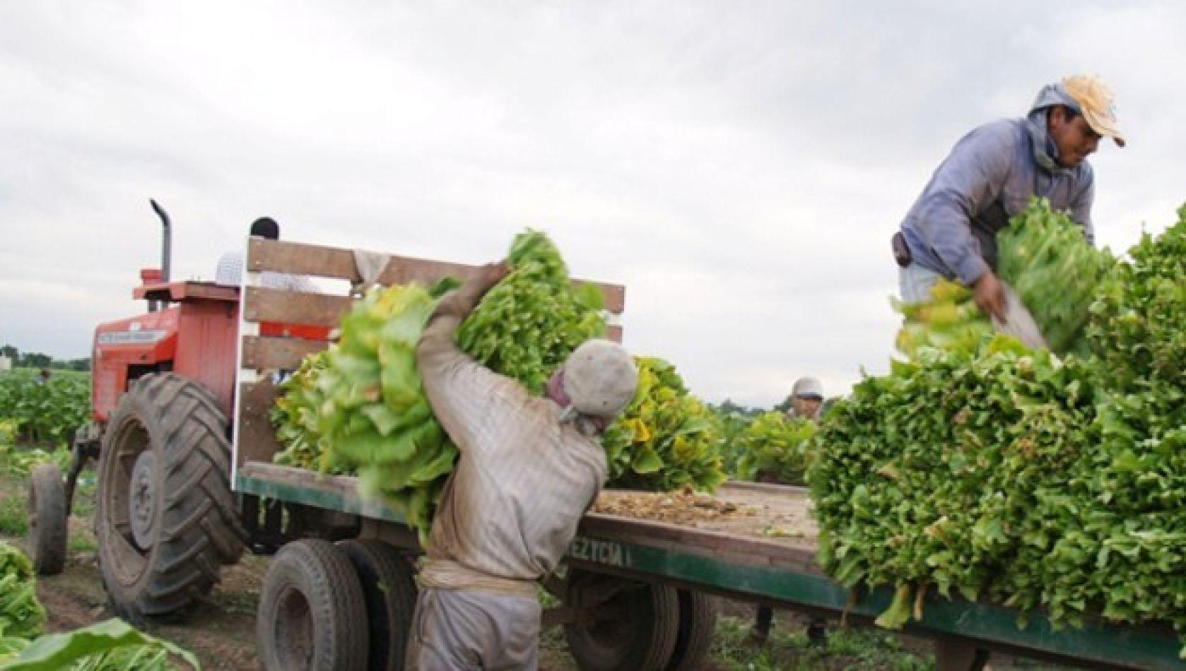 Obreros rurales